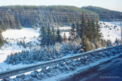Зимний лес Татарстан