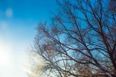 Дерево на фоне неба